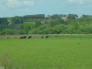 Земельный участок в Тульской области Ясногорский район можно купить недорого в коттеджном поселке Иваньково Запад